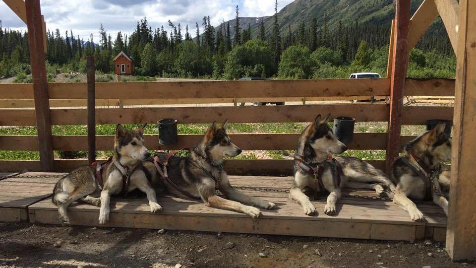 Des chiens sont couchés sur une plateforme de bois et regardent au loin.