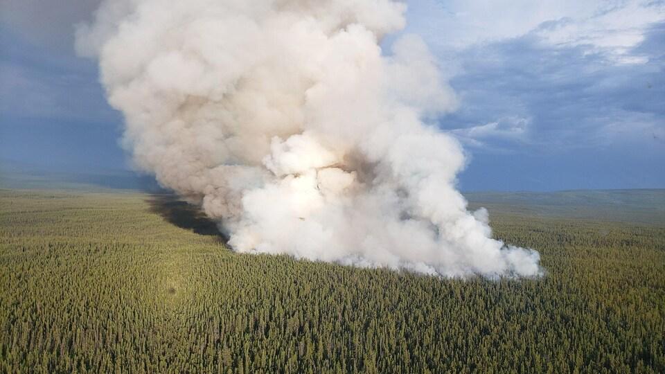 Fumée intense au dessus de la forêt.