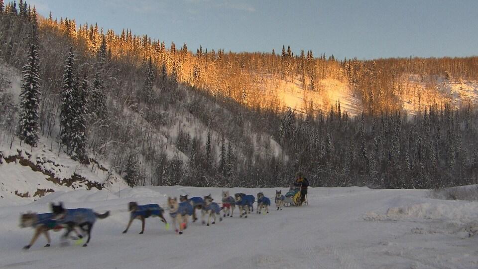 équipe de traîneau à chiens