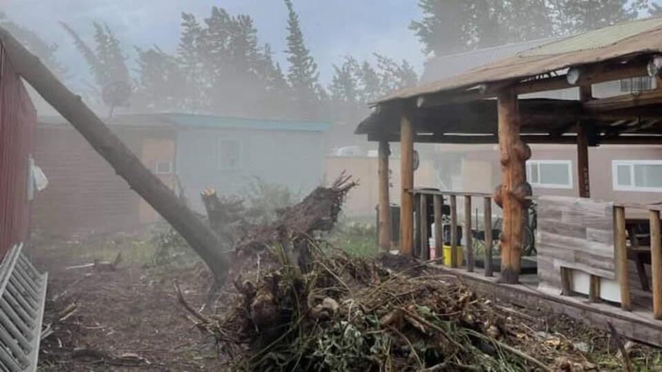 Un arbre est tombé sur un bâtiment.