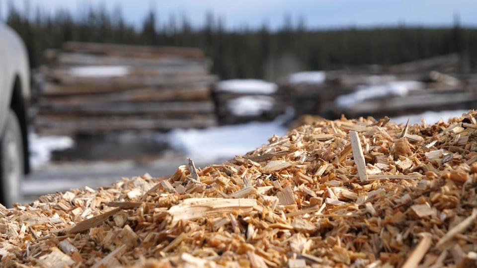 Des copeaux de bois en premier plan et des troncs d'arbres flous en arrière plan.