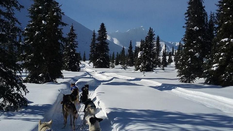 Un attelage de chiens sur un sentier entre les montagnes.