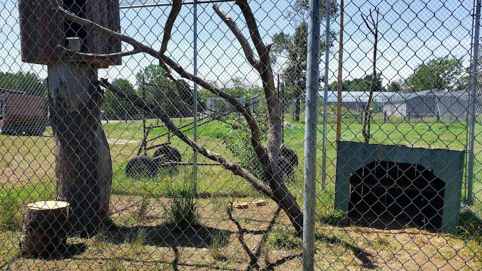 Le zoo accueille des animaux plus dociles, lors de leur première fin de semaine d'ouverture.