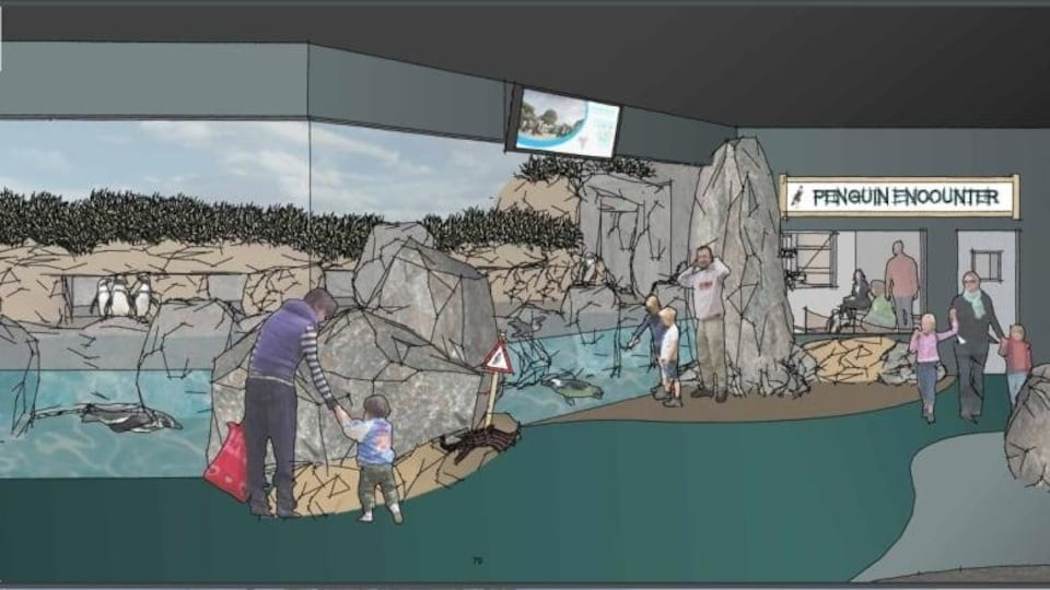 Schéma de la salle d'observation de manchots.
