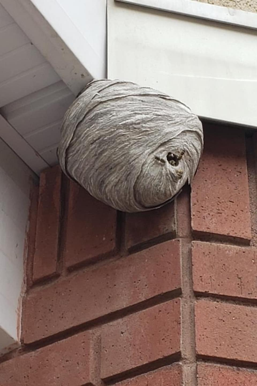 Un nid de guêpes.