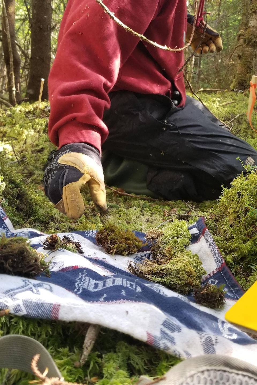 Différentes espèces de plantes et de mousses ont été inventoriées au cours de l'été, ce qui a permis d'attester la présence de certaines espèces rares ou en péril.