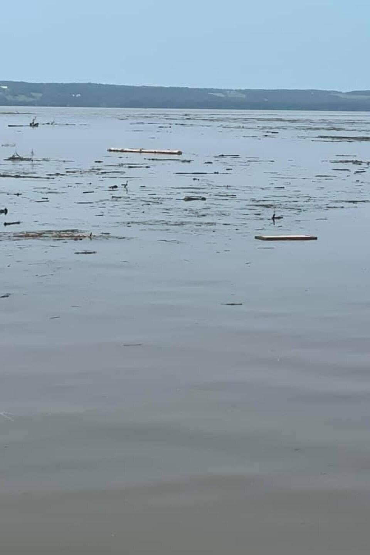 Des morceaux de bois flottent à la surface du lac.