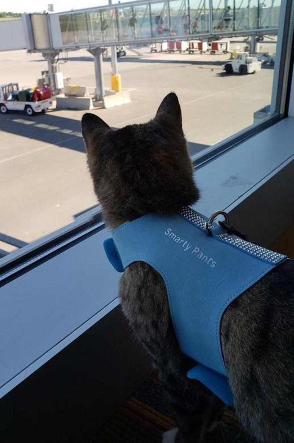 Un chat regarde des avions.