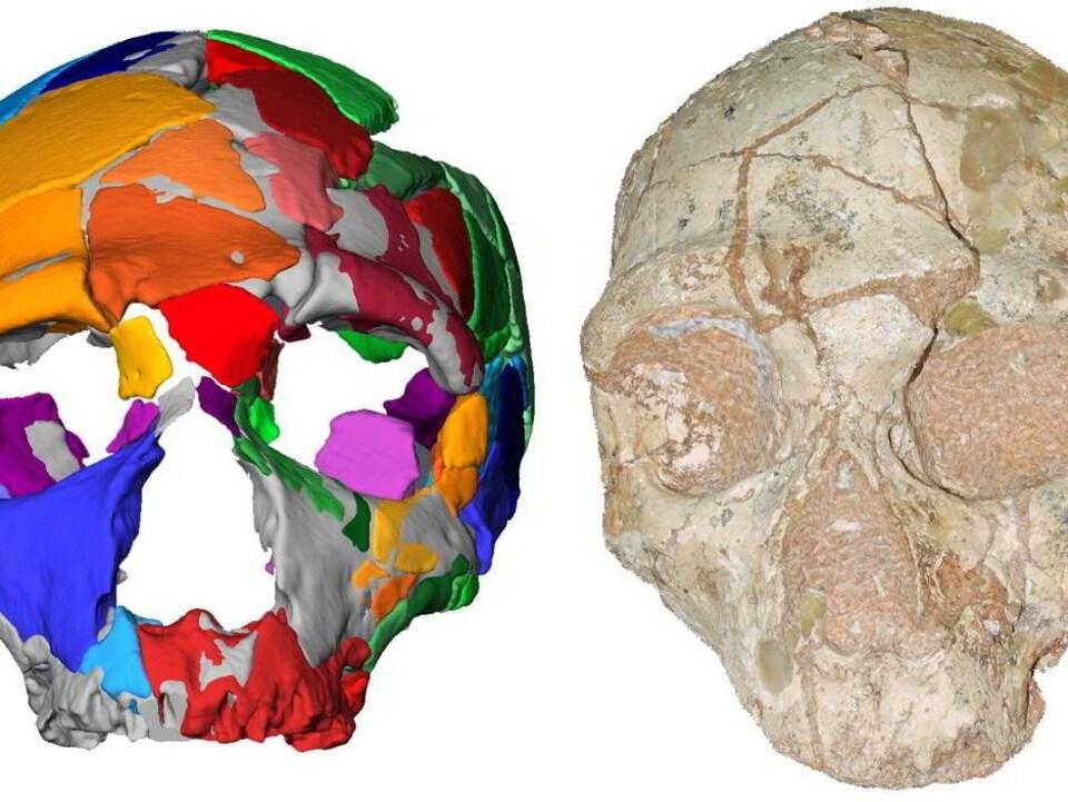 Un crâne et une reconstitution par ordinateur