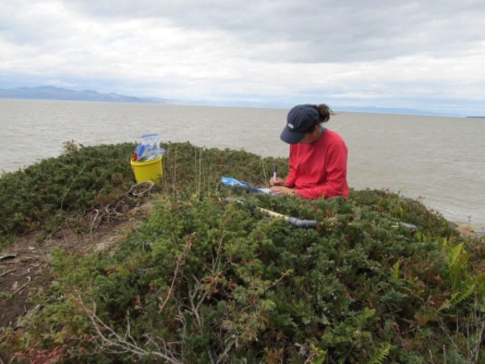 Une biologiste effectue la cueillette des baies de genévrier et prend des notes.