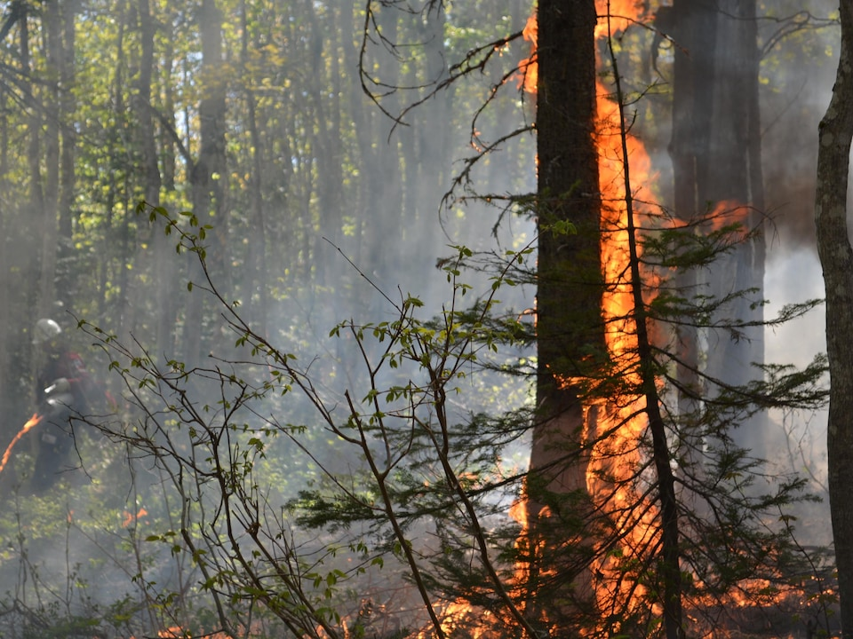 Parcs Canada procède à un brûlage dirigé afin d'aider la régénérescence d'espèces d'arbre dans le parc.