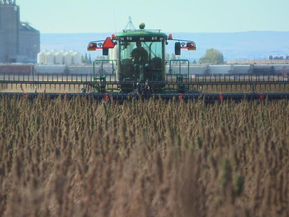 Une machinerie lourde utilisée en agriculture circule à travers un champ. Le véhicule, photographié de face, semble se diriger vers nous.