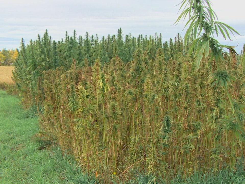 Des plantes de différentes couleurs et de différentes hauteurs se trouvent les unes à côté des autres.