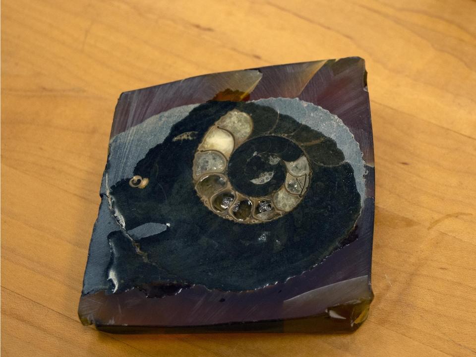 Une coquille fossilisée d'escargot.