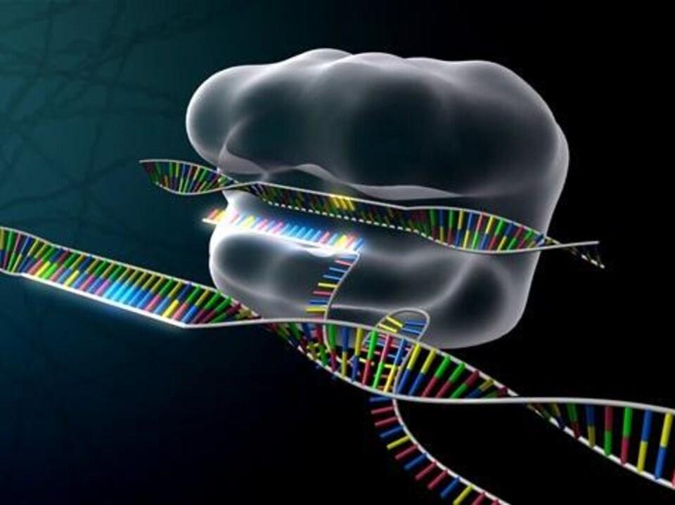 Illustration de l'outil moléculaire CRISPR.