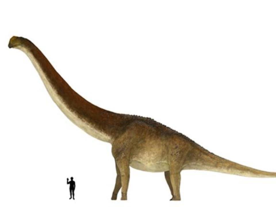 Illustration montrant un humain et un « Patagotitan mayorum ».