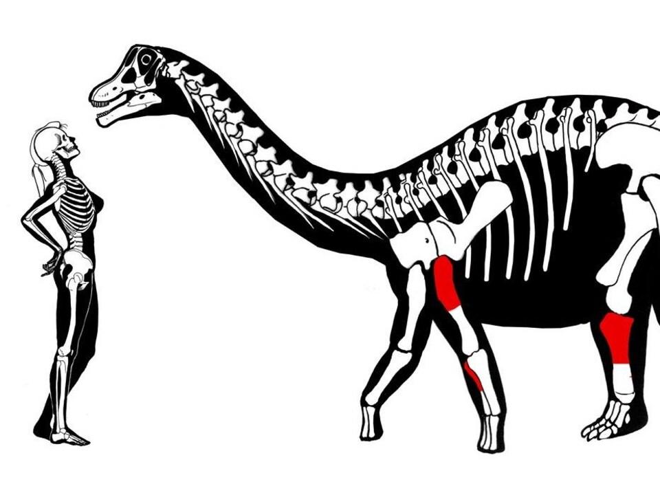 Illustration montrant un dinosaure Yamanasaurus lojaensis et une humaine.