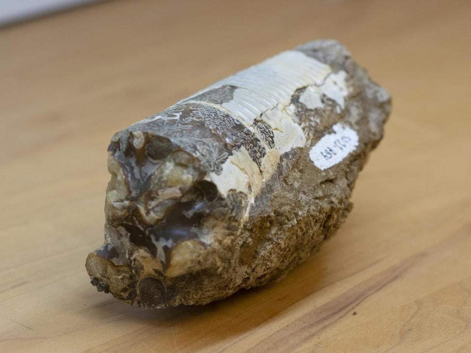 Un fossile sur une table.