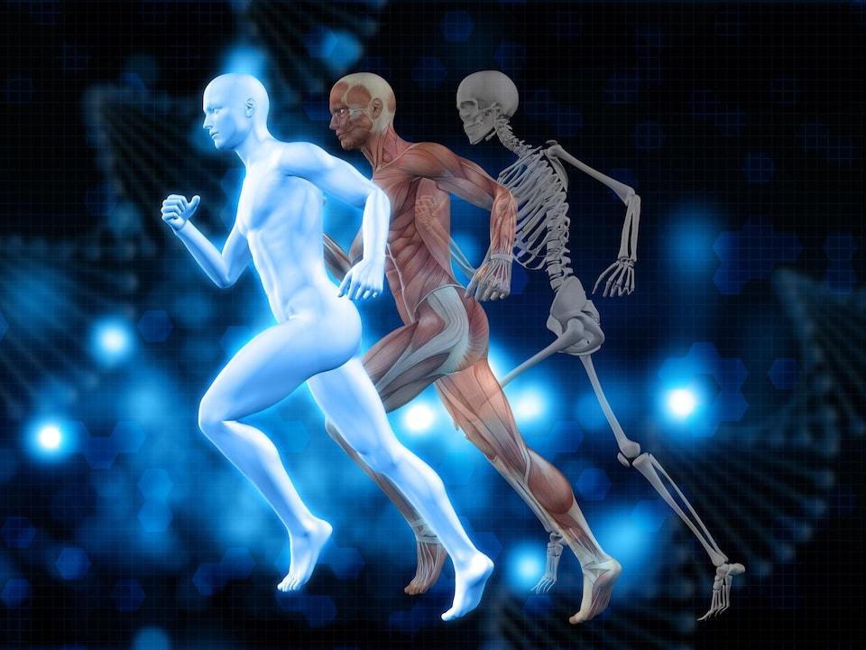 Illustration montant la peau, les muscles et le squelette d'un humain à la course.