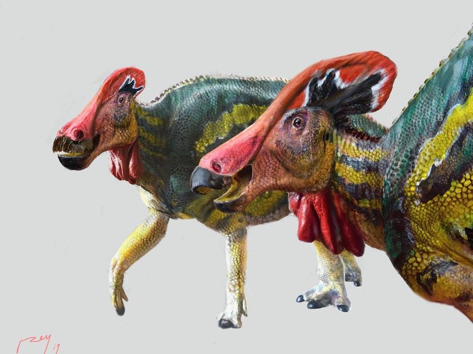 Représentation artistique de deux Tlatolophus galorum.