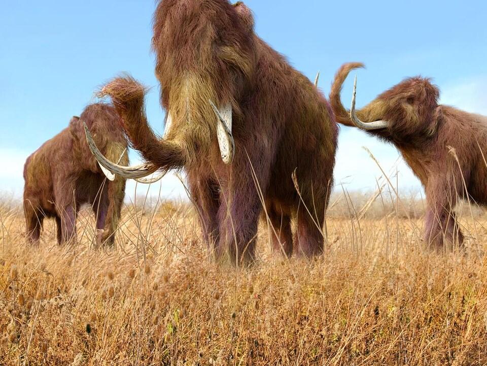 Représentation artistique de mammouths.