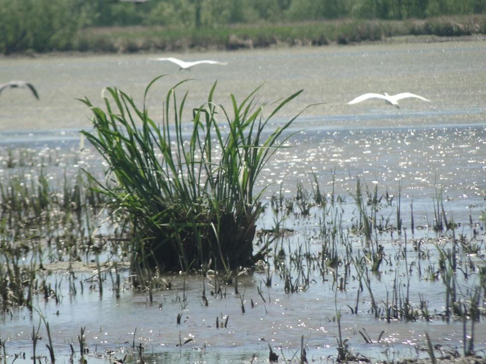 Des oiseaux marins survolent le delta.