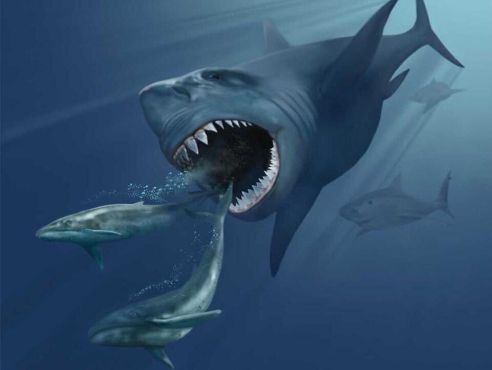Impression artistique d'un C. megalodon chassant deux baleines appartenant au genre Eobalaenoptera.