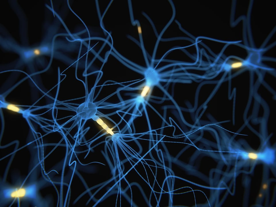 Visualisation d'axones reliant des neurones à l'intérieur du cerveau.