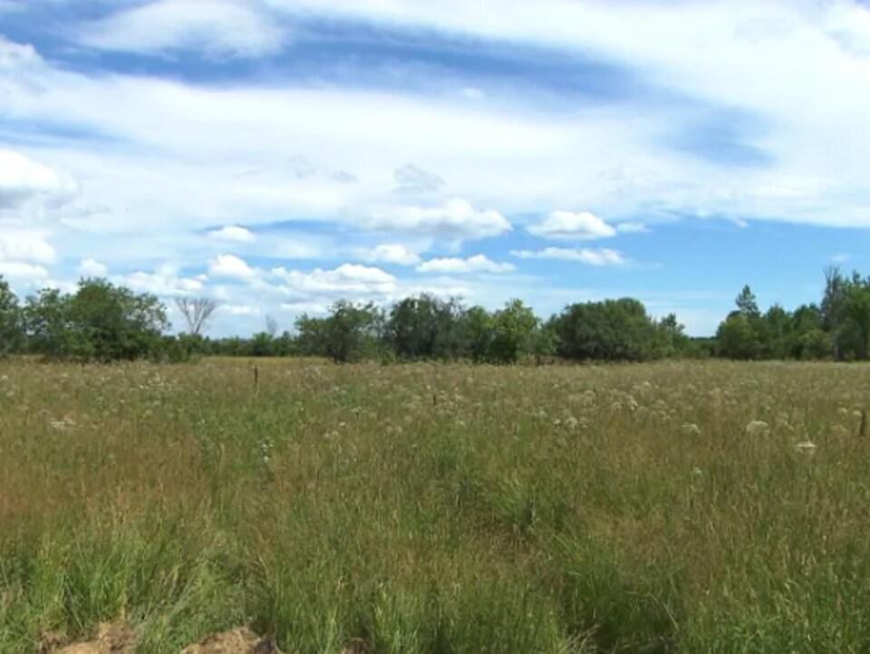 Prairie dans le parc régional de l'Anse-à-l'Orme.