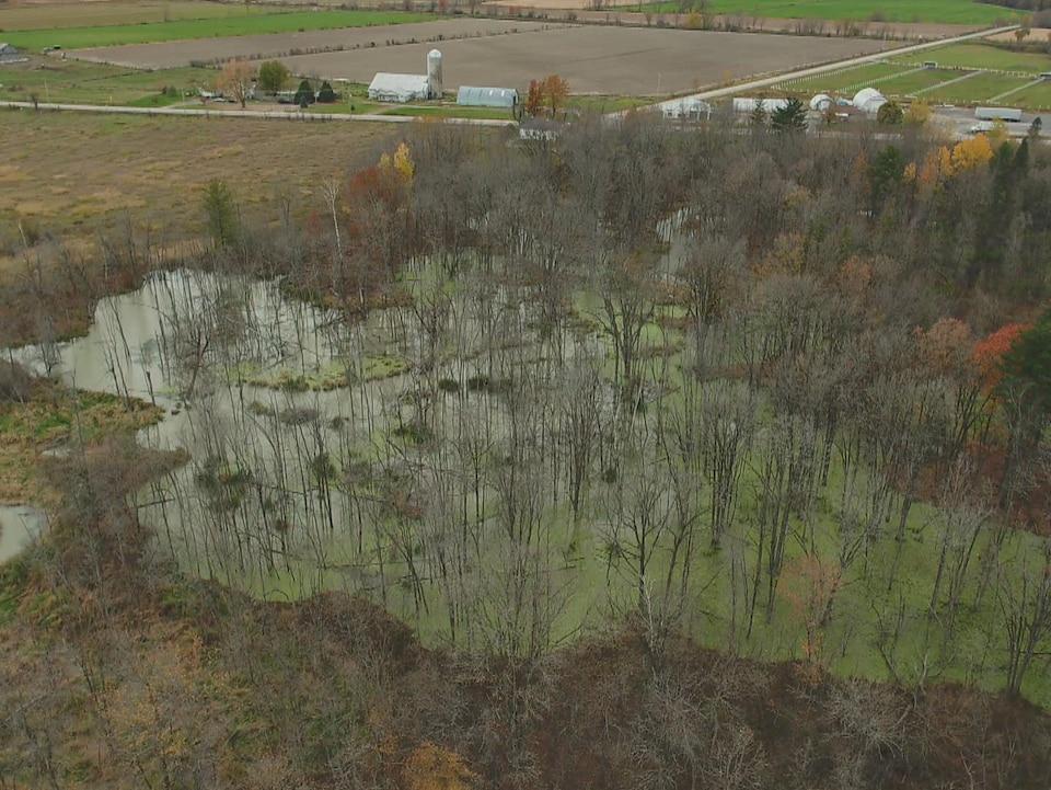 Une vue aérienne montre une route qui longe un marais du parc.