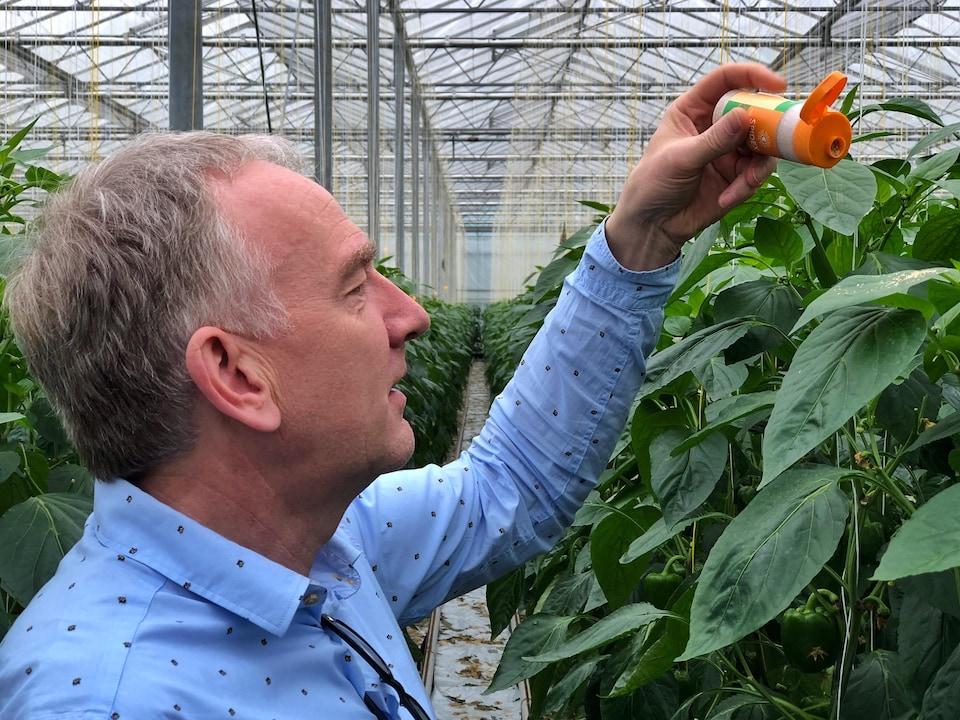 Peter Maes épand un produit sur une feuille d'un plant.