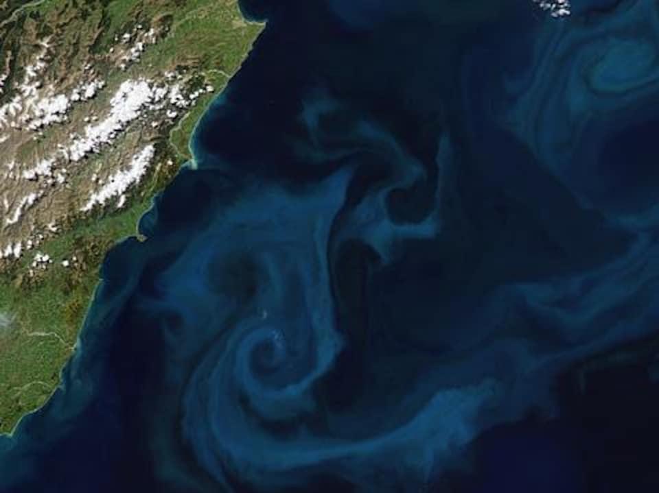 Image satellite montrant du phytoplancton au large des côtes de la Nouvelle-Zélande.