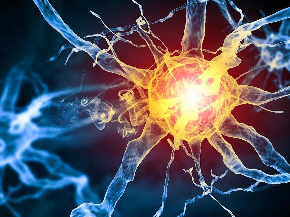 lIlustration d'une cellule qui transmet un influx nerveux.