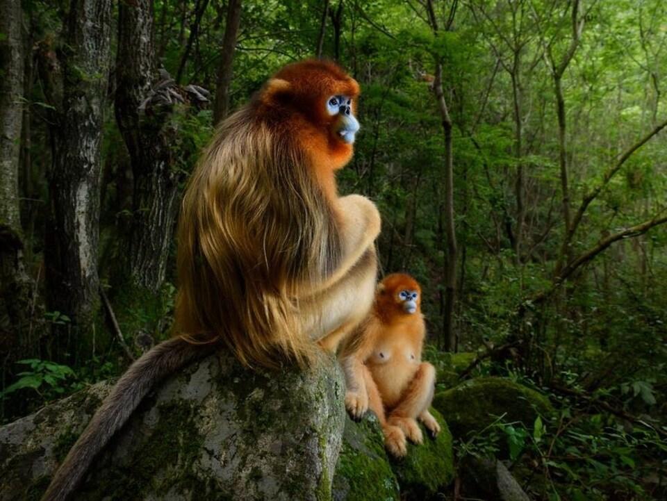 Un couple de singes.