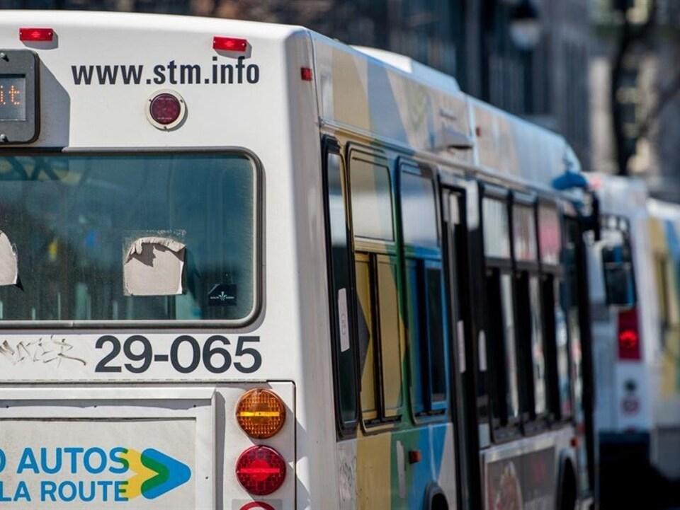 Des autobus de la Société de transport de Montréal stationnés.