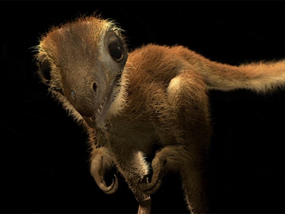 Reconstitution d'un bébé T. rex.