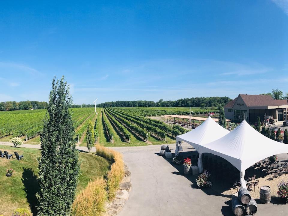 On voit les rangées de vignes et les installations du vignoble.