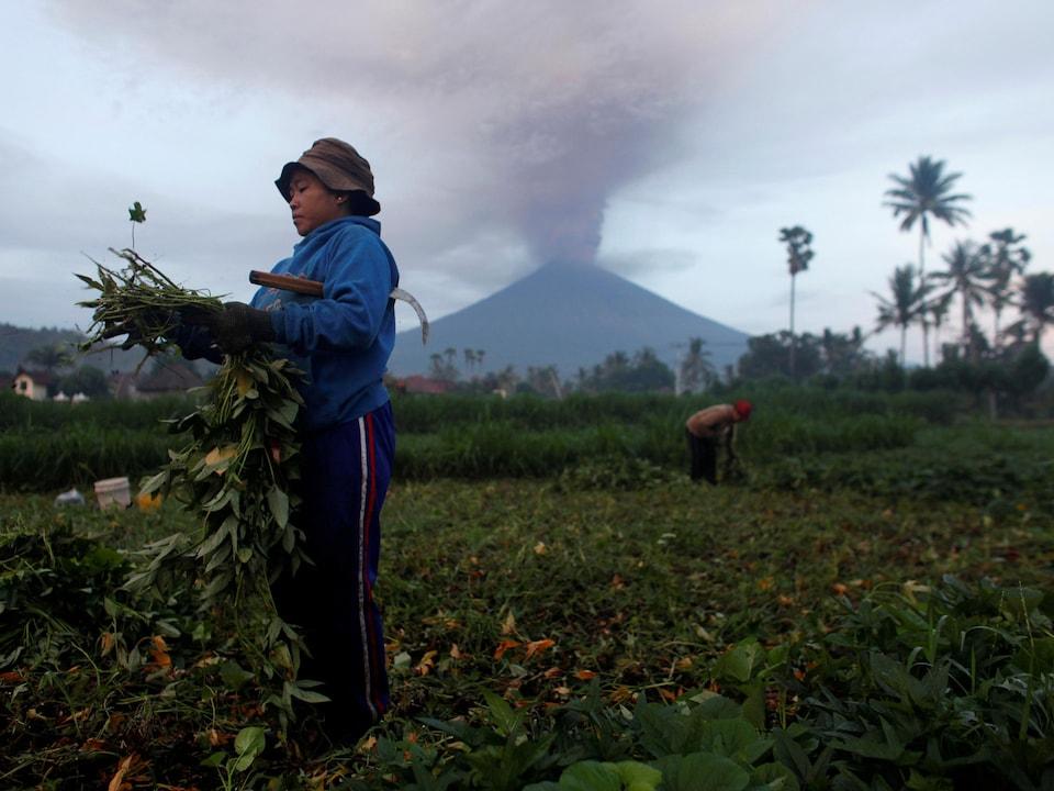 Une femme cultive son champ alors qu'un épais nuage de cendre s'élève du volcan Agung.