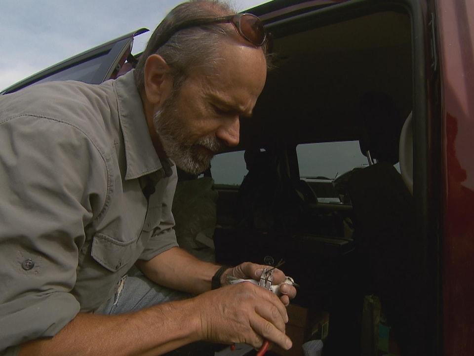 Le biologiste Yves Turcotte installe une bague à un bécasseau semipalmé.