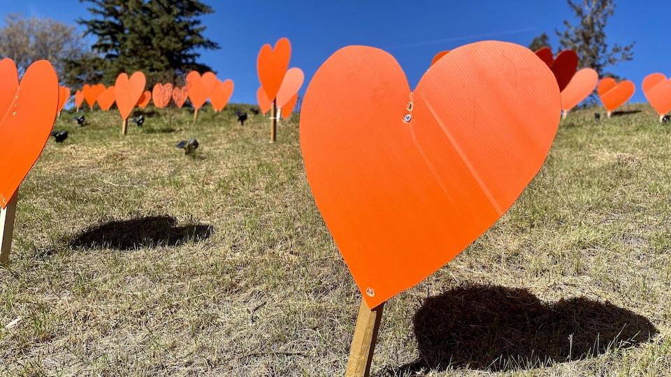 Un champ de coeurs orange.