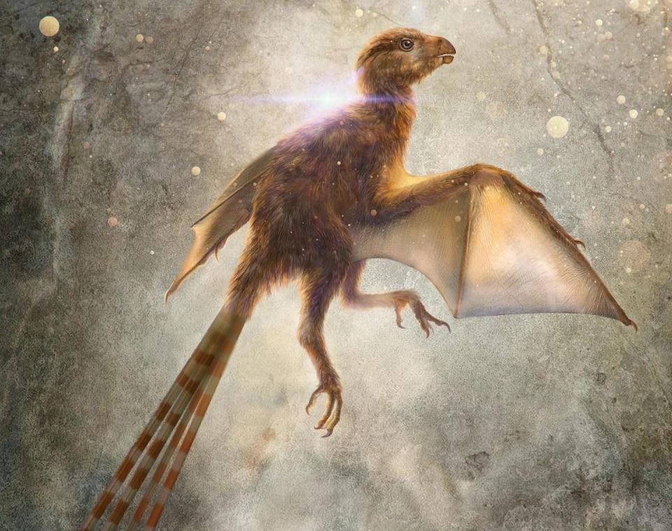 Illustration artistique d'un Ambopteryx longibrachium.