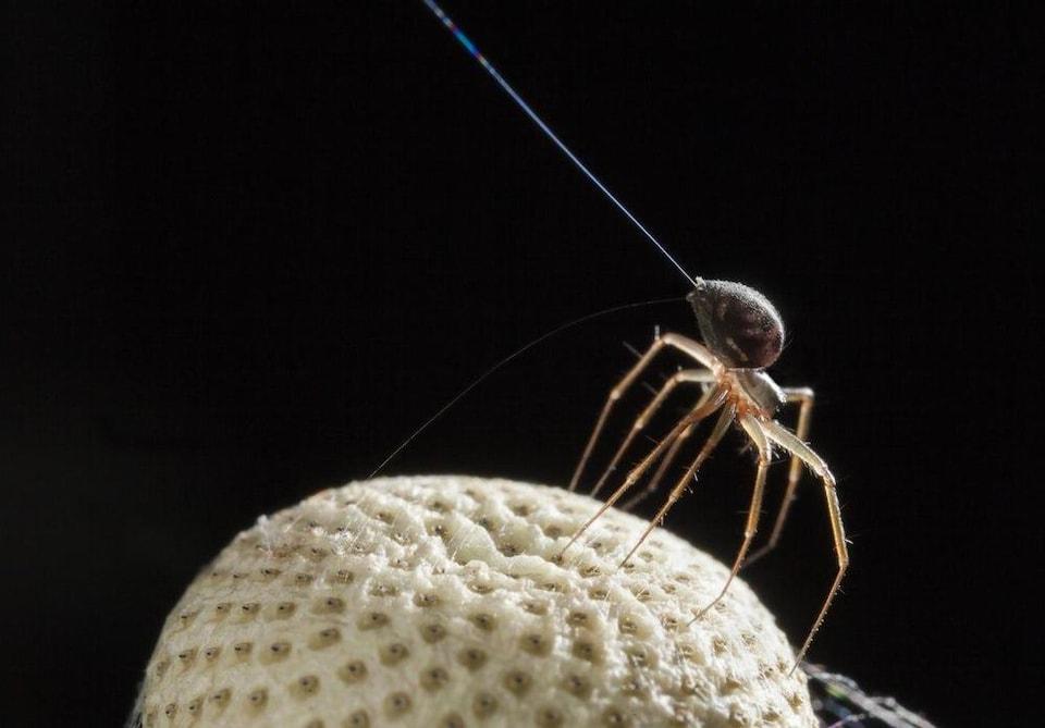 Une araignée prend son envol.
