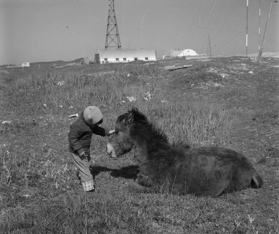 Photo en noir et blanc d'un enfant qui caresse le museau d'un poney assis dans l'herbe.