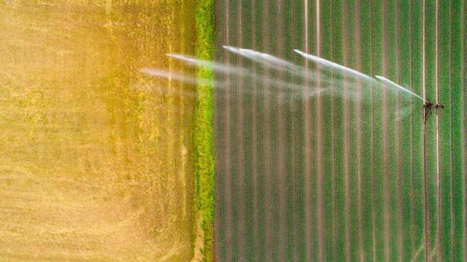 Arrosage d'un champ de blé.