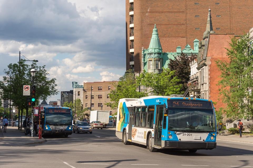 Des autobus de la STM, rue Sherbrooke.