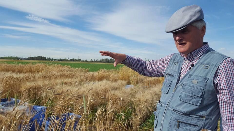 Axel Diederichsen, dans un champ de blé