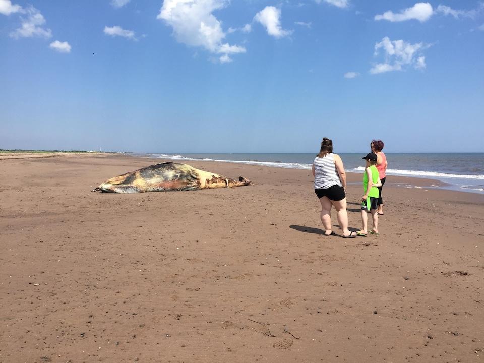 Des personnes regardent la baleine échouée.