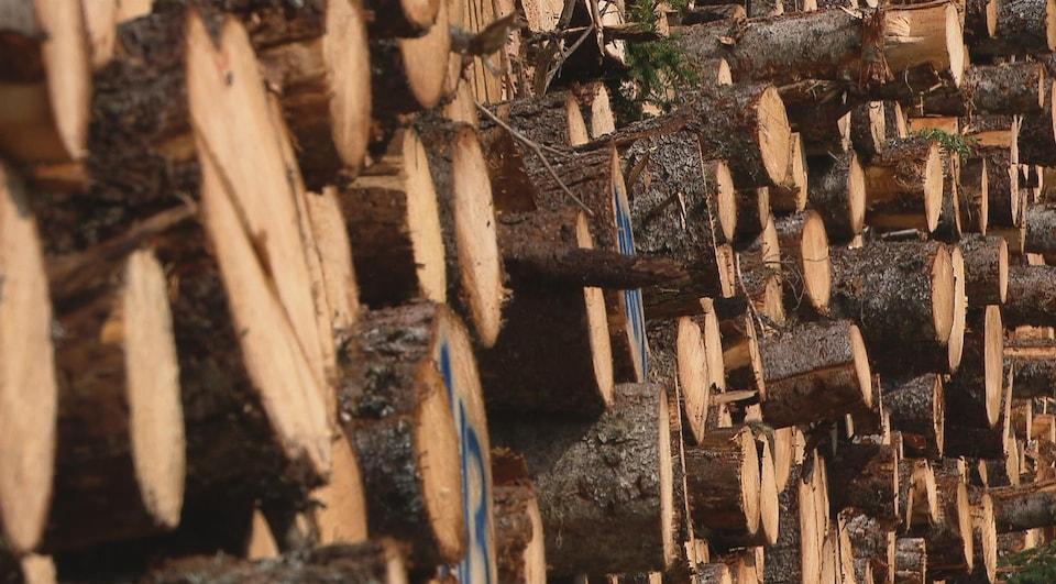 Du bois prêt à être transformé