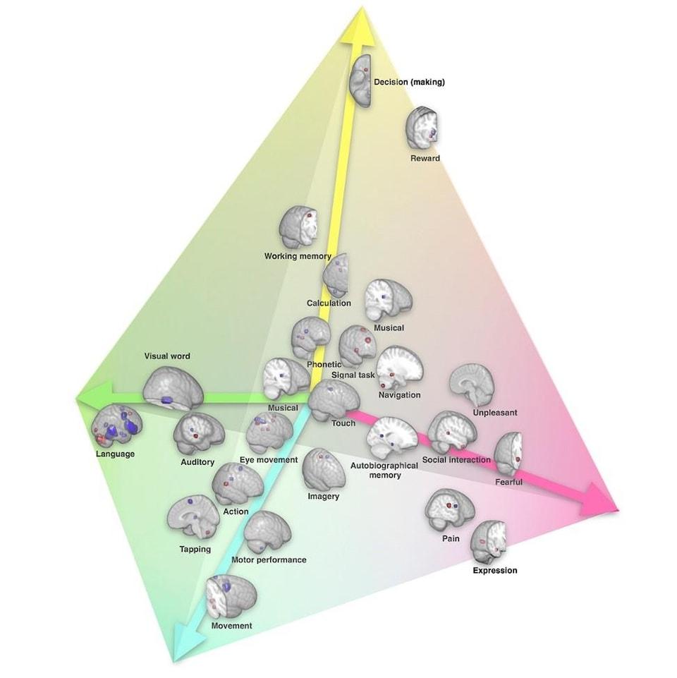 La latéralisation des fonctions cérébrales représentée dans un espace à 4 dimensions.