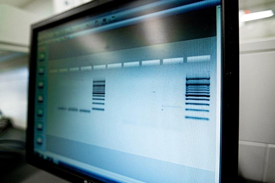 Un ordinateur affiche deux codes-barres,